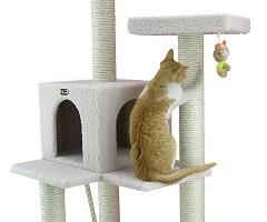 Cat Tree Review Guide