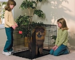 Dog Crate Review Guide