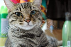 best pets to have - cat