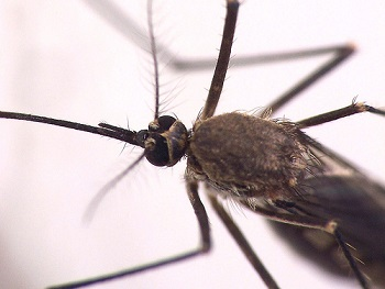 Mosquito Repellent Guide